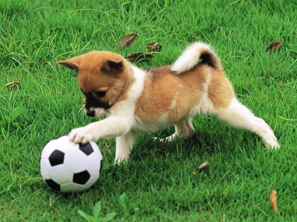 Perro mete gol en partido de Futbol