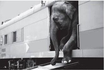 Elefante q daba una gran fortuna por un sirco, los especialistas no determinan cuales son las causas