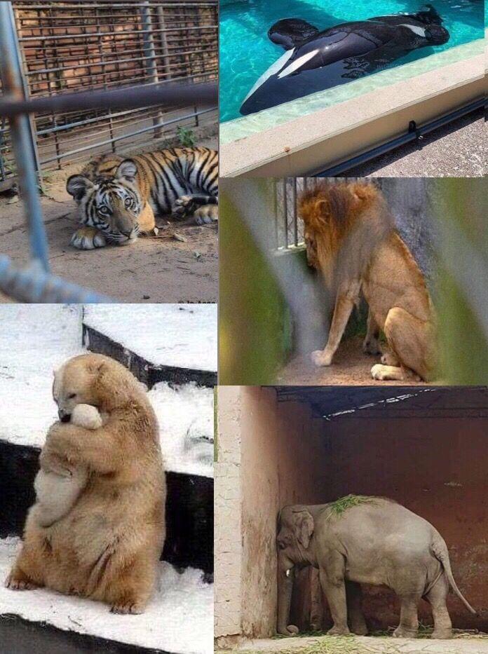Se prohíben los zoológicos en todo el mundo, una atracción inhumana aseguran.