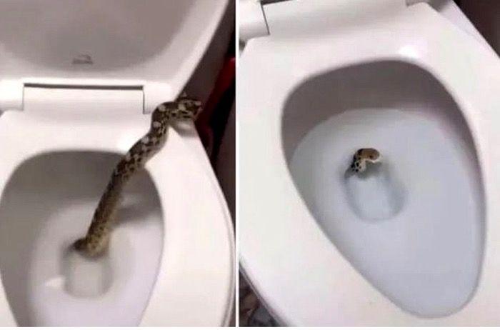 Serpientes en busca de agua se introducen a los baños en barrio General Paz